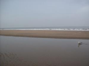 strandzandvoort